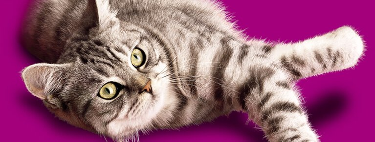 Whiskas® Adult care
