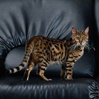 Cat Breed Selector | Types of Cats UK | WHISKAS® UK