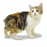 Cat Breed Selector   Types of Cats UK   WHISKAS® UK