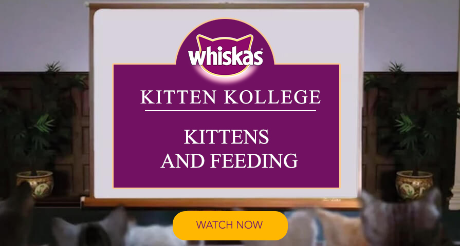 kittens drinking kitten kollege video