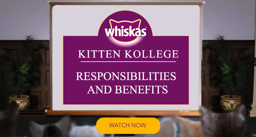 Kitten responsibilities kitten benefits choosing a kitten kollege video