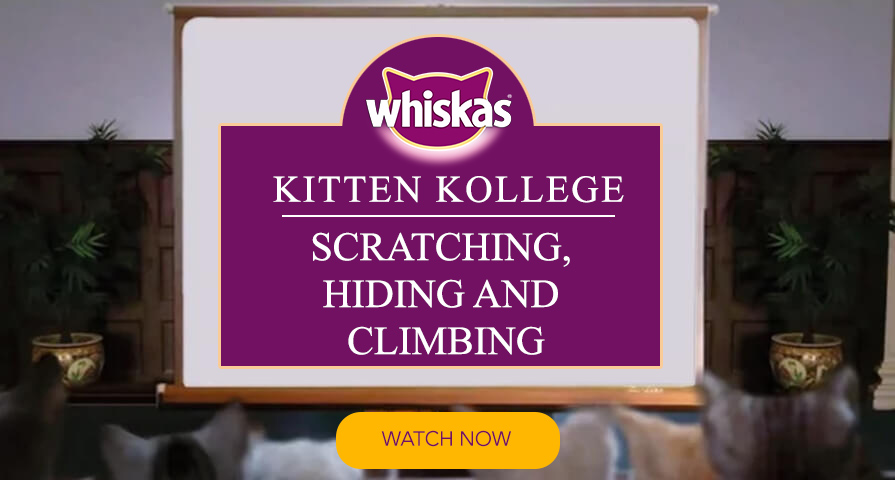 kitten scratching hiding climbing kitten kollege video