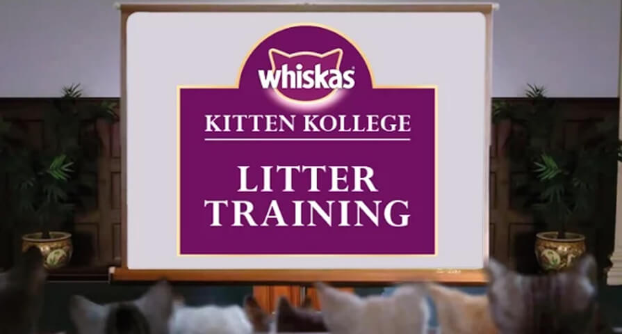 litter training kitten