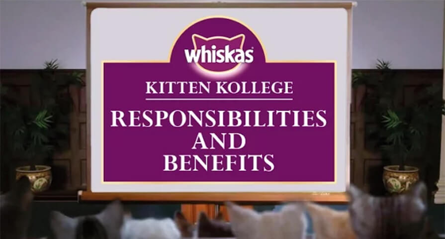 kitten benefits