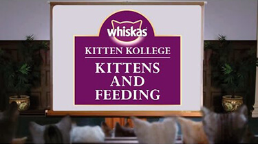 kitten feeding kitten kollege video