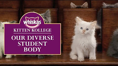 kitten cat breeds kitten kollege video
