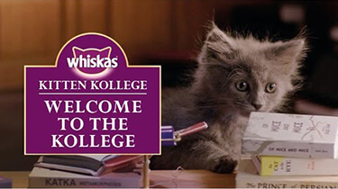 kitten kollege welcome